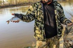Frisch gefangene kleine Fische in einer Fischerhand Lizenzfreies Stockbild