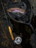 Frisch gefangene Regenbogenforelle in einem Netz lizenzfreies stockfoto
