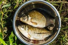 Frisch gefangener Fisch ist in einem Teller Zwei Fische Lizenzfreie Stockbilder