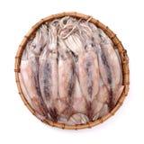 Frisch gefangener Kalmar, der ist, shinny lizenzfreie stockfotografie