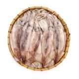 Frisch gefangener Kalmar, der ist, shinny stockfotografie