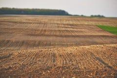 Frisch gepflanztes Feld Stockfotos