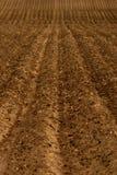 Frisch gepflogenes Bauernhof-Feld für die Landwirtschaft Lizenzfreie Stockfotografie