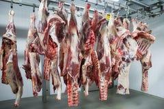 Frisch geschlachtete Hälften des Viehs, das an den Haken hängt lizenzfreie stockfotos