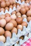 Frisch hicken Eier auf Kartonbehältern Stockbild