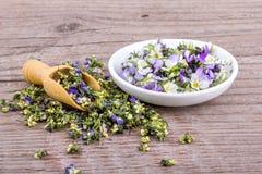 Frisch und Trockenblumen vom violetten heartsease Lizenzfreies Stockfoto