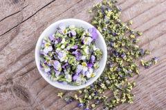 Frisch und Trockenblumen vom violetten heartsease Stockfoto