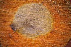 Frisch verringern Sie einen Baum Stockfoto