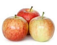 Frische Äpfel Lizenzfreie Stockbilder