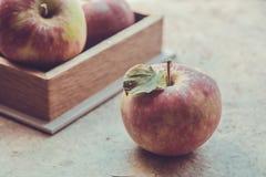 Frische Äpfel im Herbst Äpfel mit dem Blütenstaub auf der Haut Stockbild
