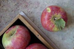 Frische Äpfel mit dem Blütenstaub, Teil Äpfel im Kasten Lizenzfreies Stockbild