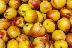 Frische Äpfel verbreiteten heraus eine gleichmäßige Schicht als Hintergrund stockfoto