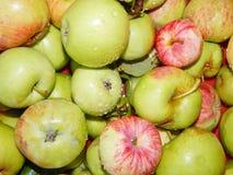 Frische Äpfel vom Garten mit Wassertropfen Stockbild