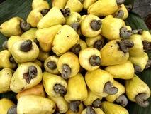 Frische Acajoubaum-Früchte Stockbild