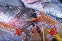 Frische adriatische Meeresfrüchte auf Eis Lizenzfreies Stockbild
