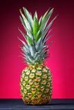 Frische Ananas Stockbild
