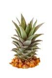Frische Ananaskrone Lizenzfreies Stockbild