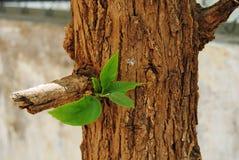 Frische anfangende Blätter Leben Stockfotografie
