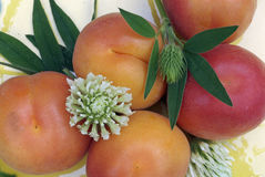 Frische Aprikose Stockbild