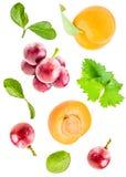 Frische Aprikosen und Trauben mit dem Blattfallen lokalisiert auf weißem Hintergrund Stockfoto