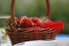 Frische ausgewählte Erdbeeren in einem Korb auf der Erdbeerplantage, sonniger Tag Stockfotos
