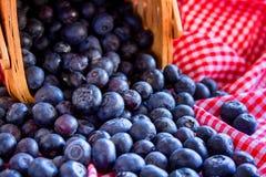 Frische ausgewählte organische Blaubeeren Stockbilder