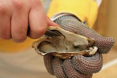 Frische Auster hielt geöffnet mit einem Austerenmesser an stockfotografie