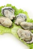 Frische Austern Stockbilder