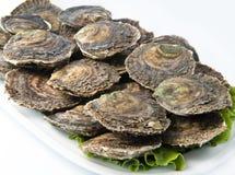 Frische Austern Stockbild