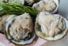 Frische Austern Lizenzfreies Stockfoto
