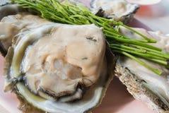 Frische Austern Lizenzfreie Stockbilder