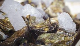 Frische Austern auf Eis Lizenzfreie Stockfotografie