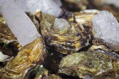 Frische Austern auf Eis Lizenzfreie Stockbilder