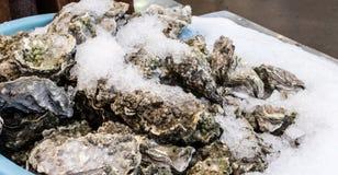 Frische Austern bedeckt mit Eis Stockbilder