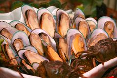 Frische Austern in der Gaststätte Stockbild