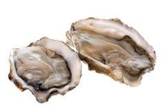 Frische Austern getrennt Stockfoto