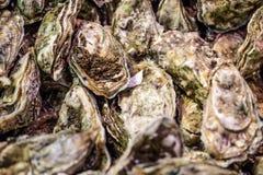 Frische Austern mit Algen für frische natürliche Meeresfrüchte für Feiertage Lizenzfreie Stockbilder