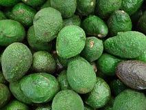 Frische Avocados Lizenzfreie Stockfotografie