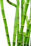 Frische Bambusstämme Stockbilder