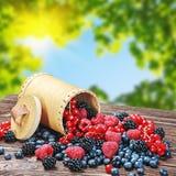 Frische Beeren in einem Korb Stockbild