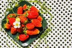 Frische Beerenerdbeeren auf einer dunkelgrünen quadratischen Platte Stockfotos