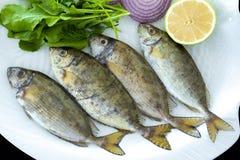 Frische beschmutzte spinefoot Fische mit den Raketenblättern gedient auf weißer Platte stockbilder