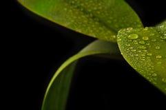 Frische Blätter Stockfoto