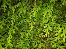 Frische Blätter Stockfotografie