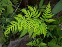 Frische Blätter Stockbilder