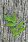 Frische Blätter auf altem Holz Stockfotos