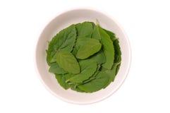 Frische Blätter des Basilikums lizenzfreie stockfotografie