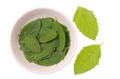Frische Blätter des Basilikums stockbilder