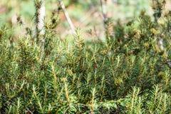 frische Blätter des vibrierenden grünen Frühlinges des Baums im Frühjahr Lizenzfreie Stockfotografie
