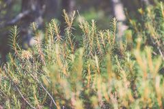 frische Blätter des vibrierenden grünen Frühlinges von Weinlese f des Baums im Frühjahr - Stockfotos